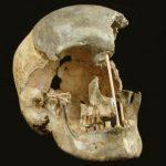 El genoma más antiguo de un europeo desvela sexo continuo con los neandertales